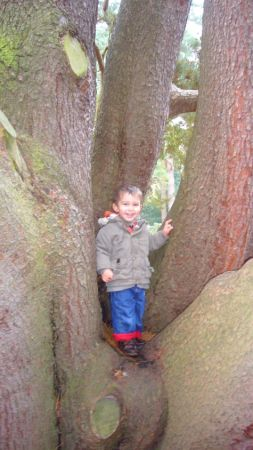 thomastree